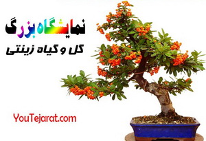 http://www.youtejarat.com/sellerlink.aspx?user_name=bazrkhoneh&k=S